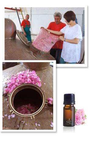 奧圖玫瑰精油製作